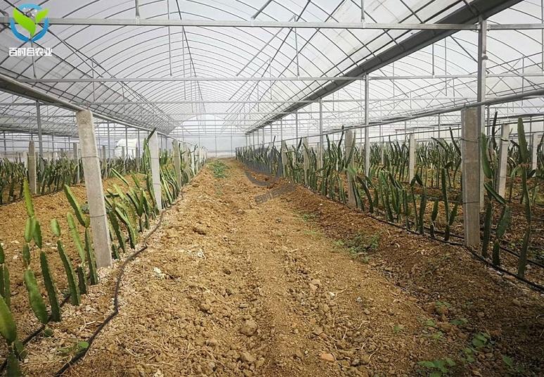 滴灌水肥一体化技术的特点